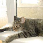 Кошка на окошке, вернее – кот на подоконнике.